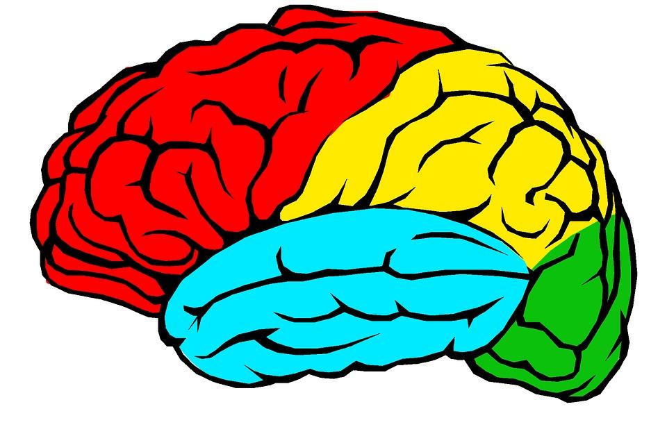 Neurobiologia anoreksji – badania dotyczące wpływu niedożywienia na mózg